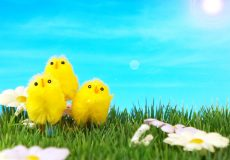 Frohe Ostern – 3 Küken auf der grünen Wiese