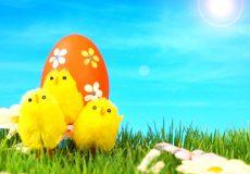 Ostern – 3 Küken und 1 Osterei