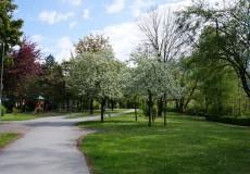 Apfelbaum im Frühjahr