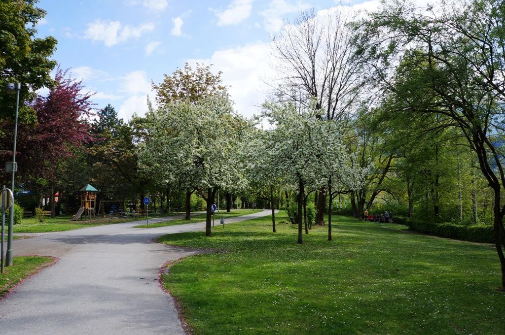 Apfelbaum-Frühjahr
