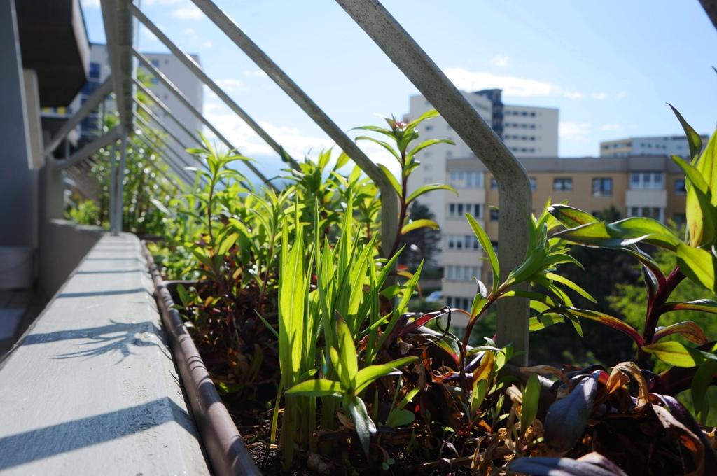 Balkonblumen Frühjahr