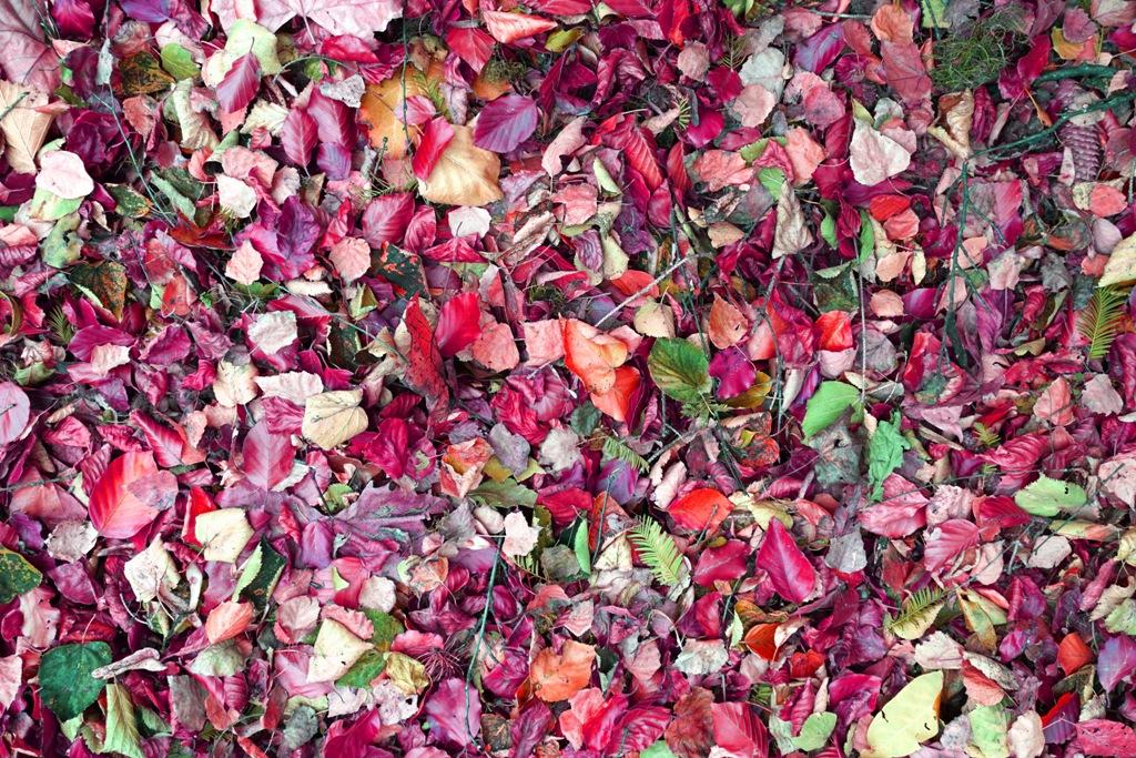 Herbstlaub in tollen Farben