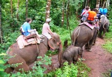 Elefanten reiten Thailand