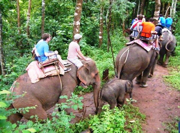 elefanten reiten thailand lizenzfreie fotos bilder kostenlos herunterladen ohne anmeldung. Black Bedroom Furniture Sets. Home Design Ideas