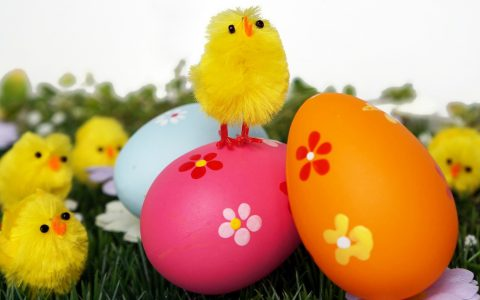 Frohe Ostern Küken sitzt stolz auf Ostereiern (Ostern)
