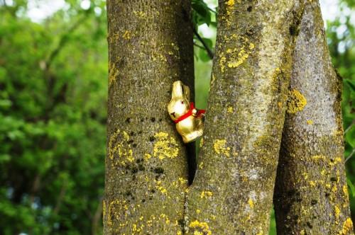 Osterhase am Baum