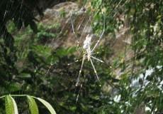 Spinne Urwald