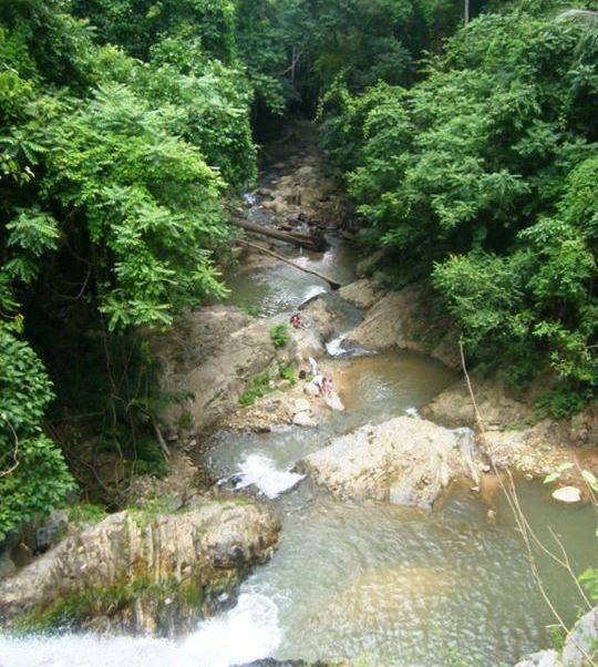 Urwald Thailand