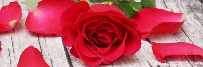 Valentinstag / Rote Rose auf Holztisch