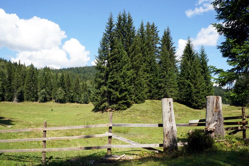 Almwiese Wald