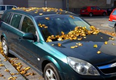 Herbst – Auto unter Blättern