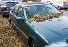 Auto unter Herbstlaub
