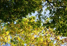 Baumblick Herbst