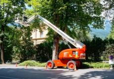 Baumschnitt mit Hubsteiger