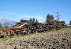Baumstämme und Hochspannungsleitung