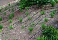 Bewässerungsschlauch 2