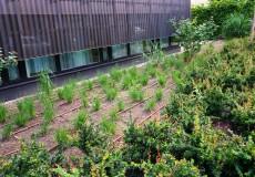 Bewässerungsschlauch Garten
