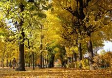 Herbst – Blätter fallen