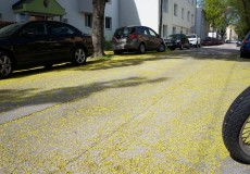 Blütenmeer auf Straße