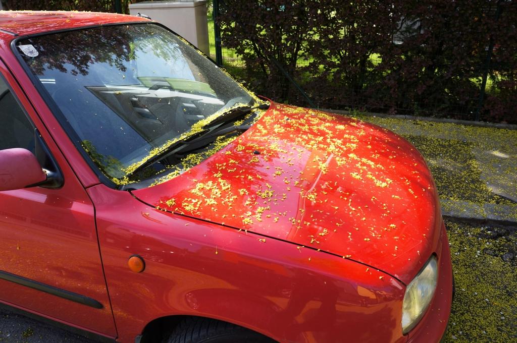 Blütenmeer auf Auto