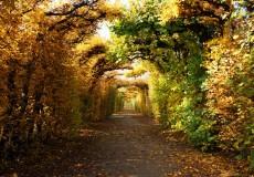 Herbst – buntes Blätterdach