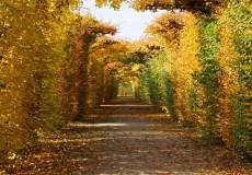 Herbst Blättertunnel