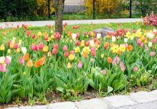 Blumen und Blumenwiese