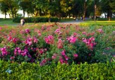 Blumen Festung Kalemegdan Belgrad
