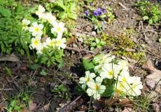 Blumen im Frühjahr