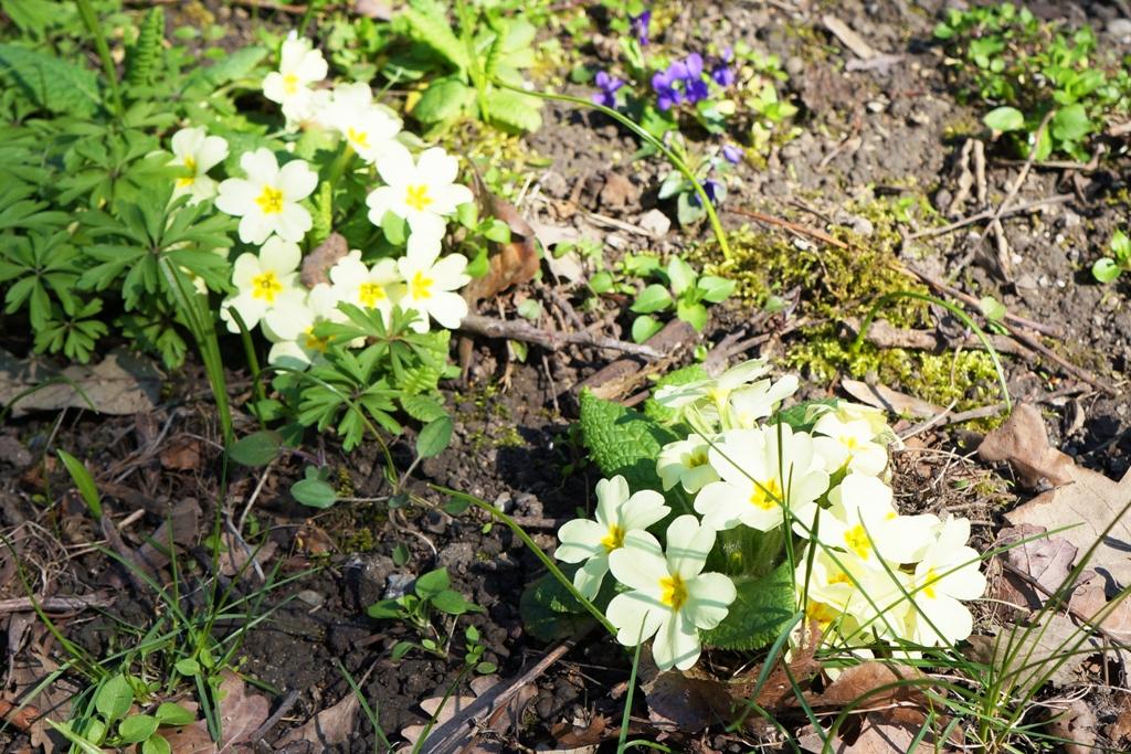 Blumen Im Fruhjahr Lizenzfreie Fotos Bilder Kostenlos