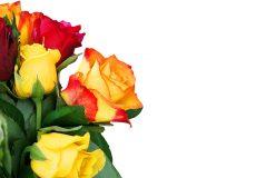 Blumen Grußkarte
