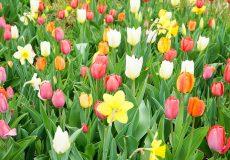 Blumenwiese und Blumen