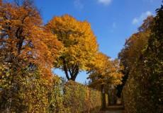 Herbstbeginn – bunte Bäume