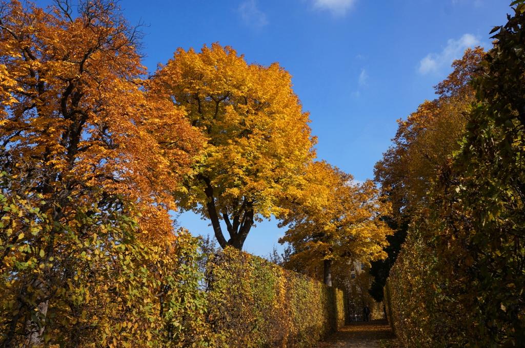 bunte-bäume-herbstbeginn
