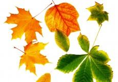 Bunte Blätter Herbst 1