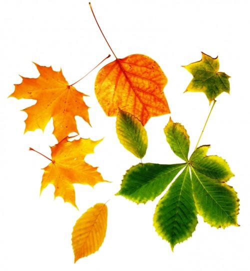 Bunte Bl 228 Tter Herbst 1 Lizenzfreie Fotos Bilder