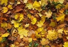 Herbst – bunte Blätter