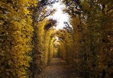 Herbst – bunter Blätterbogen