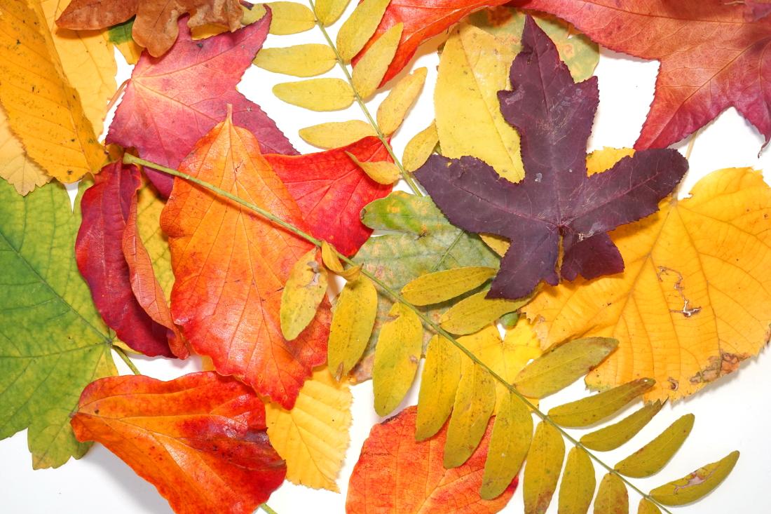 Herbst – Leuchtende bunte Blätter