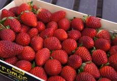 Steige voller Erdbeeren
