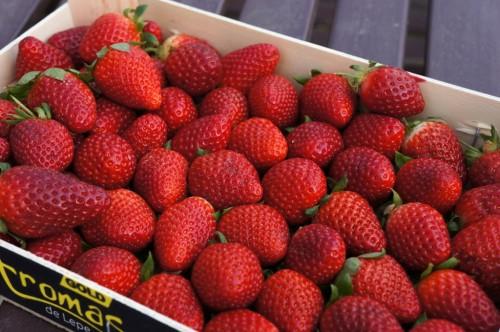 erdbeeren-in-steige