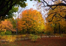 Herbst – Bunte Fantasiewelten