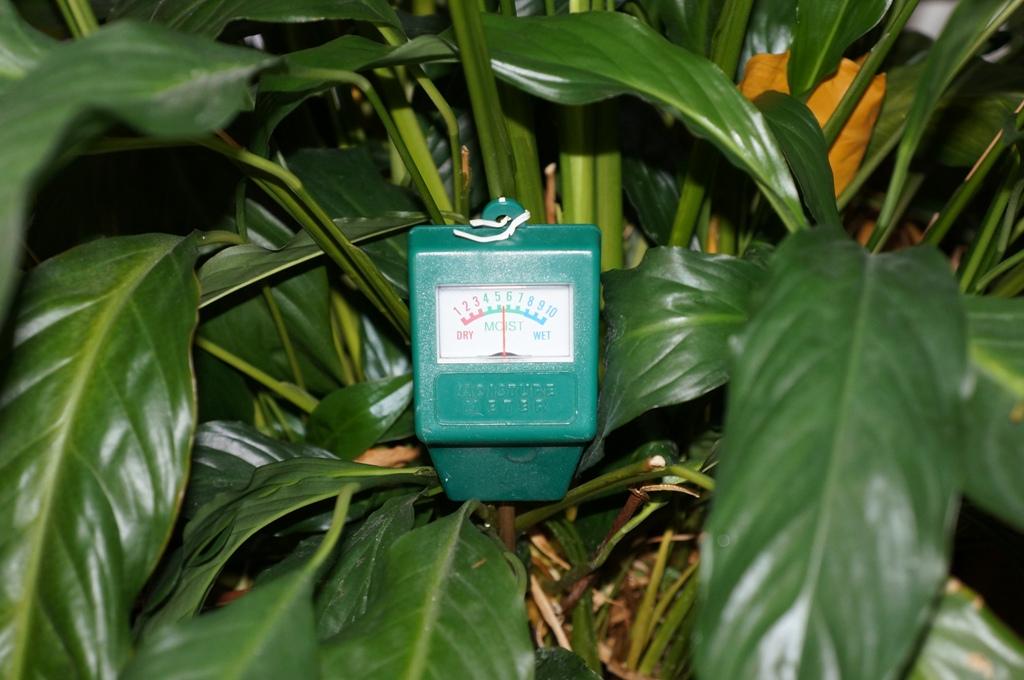 Feuchtigkeitsmesser Pflanzen