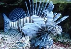 Fisch Indonesien