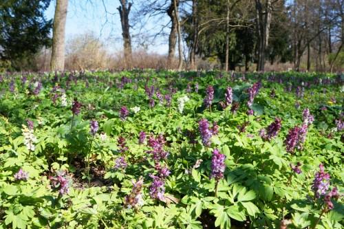 Lizenzfreie Bilder zum Thema Frühlingswiese Blumen