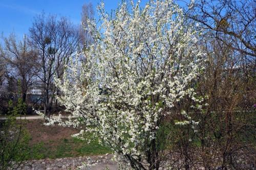 fruehling-blueten-knospen