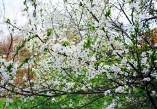 Frühling Blüten Knospen