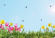 Frühling, Blumenwiese, Gras