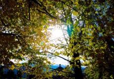Gegenlicht Herbst