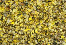 Gelbes leuchtendes Herbstlaub